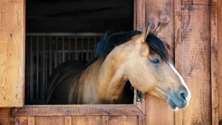 A Season Of Thanks at Oak Haven Acres Horse Retirement